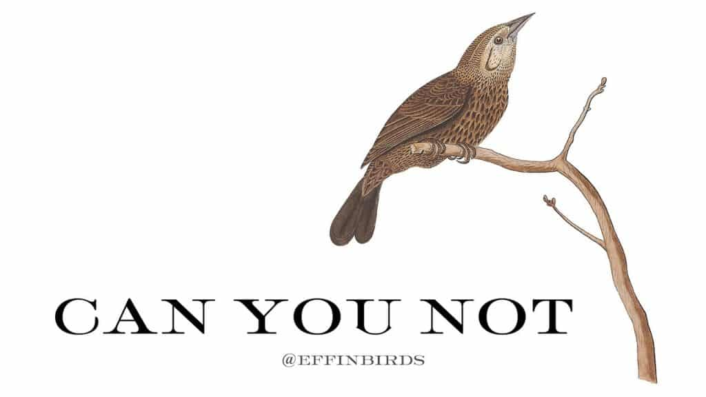 EffinBird: Can you not