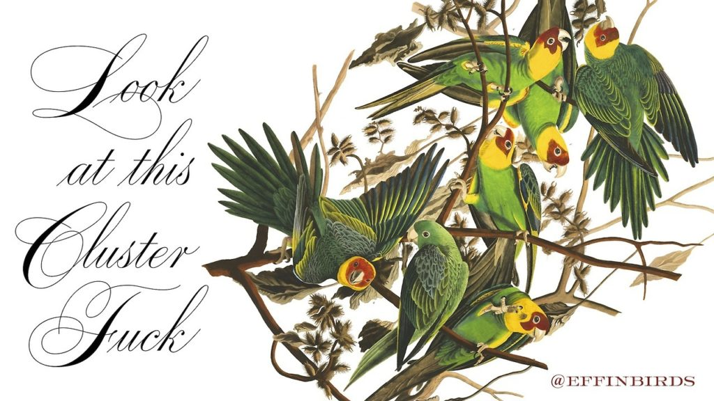 A bunch of effin' parrots saying: Look at this cluster fuck