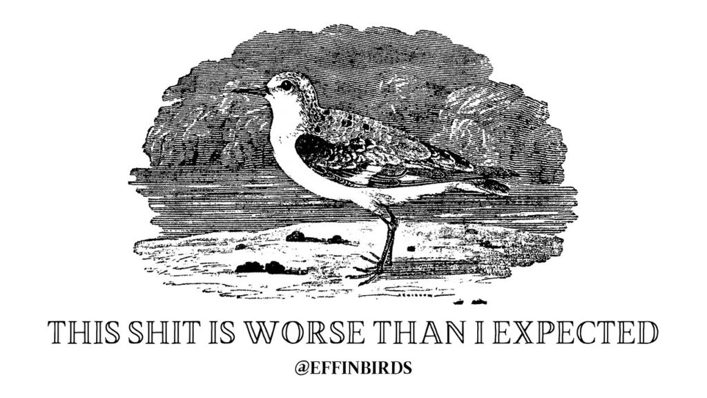 EffinBird: This shit is worse than expected